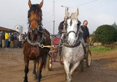 Provas equestre adiadas para o próximo fim de semana (c/video).