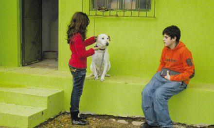 Seis cães ganharam nova casa