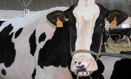 Produtores de leite asseguram que abastecimento decorre com normalidade