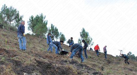 """Um quarto das espécies do projeto """"100 mil árvores"""" plantadas na Trofa desde 2011"""