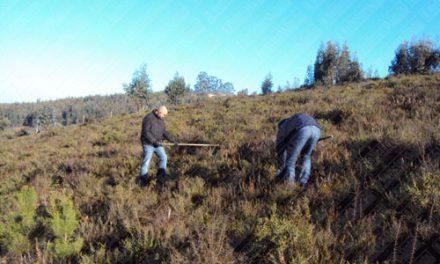 Ação de limpeza e reflorestação na Quinta da Sardoeira