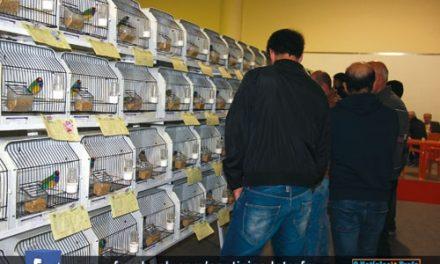 ExpoAves com mais 2000 aves