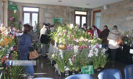 Exposição e venda de Orquídeas