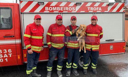 Bombeiros resgatam cão num silvado