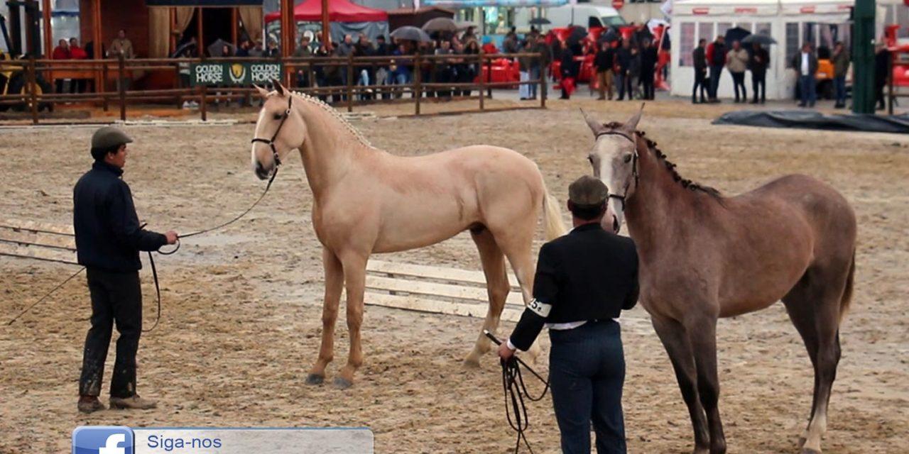 Esperados entre 200 a 250 cavalos na Feira